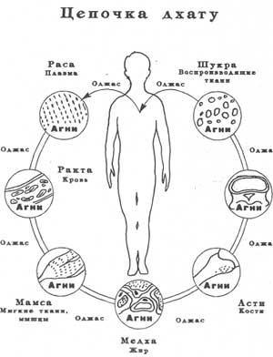 * аюрведа, здоровье и питание -- трансформация/метаболизм тканей тела *